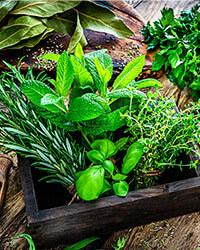 Herbs & Natural Remedies